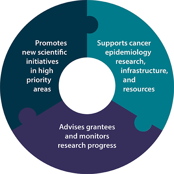 Promotes new scientific initiatives in high priority areas. Supports cancer epidemiology, research, infrastructure, and resources. Advises grantees and monitors research progress.